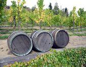Casks wine — Stock Photo