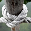 The knot of the rope - Stock Photo