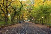 Central park. — Photo
