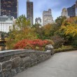 Central Park and ManhattSkyline. — Stock Photo #14006704