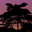 Silhouette of tree and red sky — Stock Photo #32628929