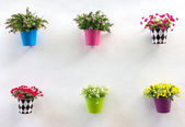 Display Jardiniere and flower on wall — Stockfoto