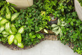Small decoration garden on top view — Stock Photo