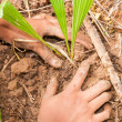 Hands planting a tree — Stock Photo