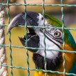 Macaw parrot beak bird cage — Stock Photo #38886841