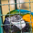 Macaw parrot in bird cage — Stock Photo