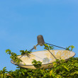 Stock Photo: Satellite dish hide in bush