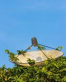 Satellite dish hide in bush — Stock Photo