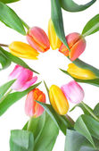 Tulips in circle — Stock Photo