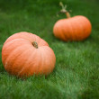 Stock Photo: Two pumpkins