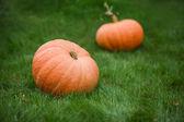 Two pumpkins — Stock Photo