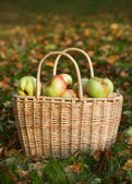 Basket with red and yellow apples — Stock Photo