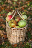 Red and yellow apples in basket — Stock Photo