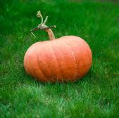 Orange pumpkin on grass — Stock Photo