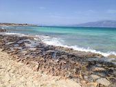Chrissi Island, Greece, relict cedar, sand with shells, seashore — Stock Photo