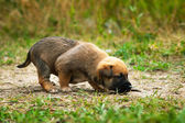 Little cute puppy. — Stock Photo