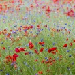 Stock Photo: Wildflower Meadow