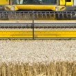 Close up of a combine harvester at work — Stock Photo