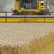 Close up of Combine harvester at work — Stock Photo