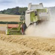 Combine harvester cutting cereal — Stock Photo