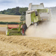 Stock Photo: Combine harvester cutting cereal