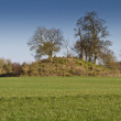Stock Photo: Tree covered neolithic burial mound