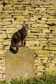 Cat sat on a Tombstone — Stock Photo