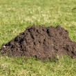 Close up of mole hill — Stock Photo #41389357