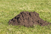 Close up of a mole hill — Stock Photo