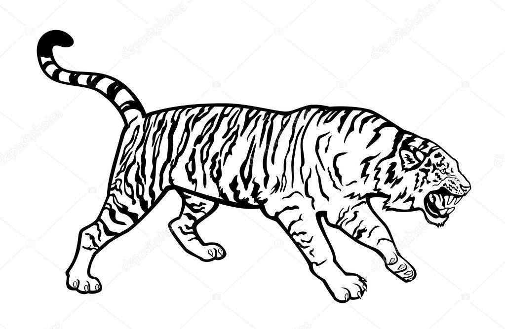 Black And White Tiger Background Tiger Black And White Vector