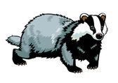 European badger isolated on white — Stock Vector