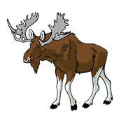 Moose on white background — Vector de stock