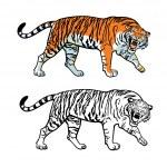 ������, ������: Amur Siberian tiger