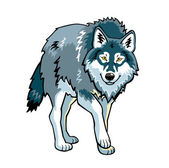 Standing wolf on white — Stock Photo