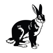 Hare black and white image — Stock Vector