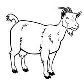 Ayakta keçi siyah beyaz resim — Stok Vektör