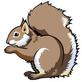 Sitting squirrel isolated on white — Vector de stock