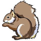 Wiewiórka siedzi na białym tle — Wektor stockowy