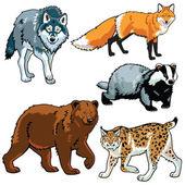 Uppsättning av rovdjur — Stockvektor