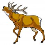 Постер, плакат: Red deer