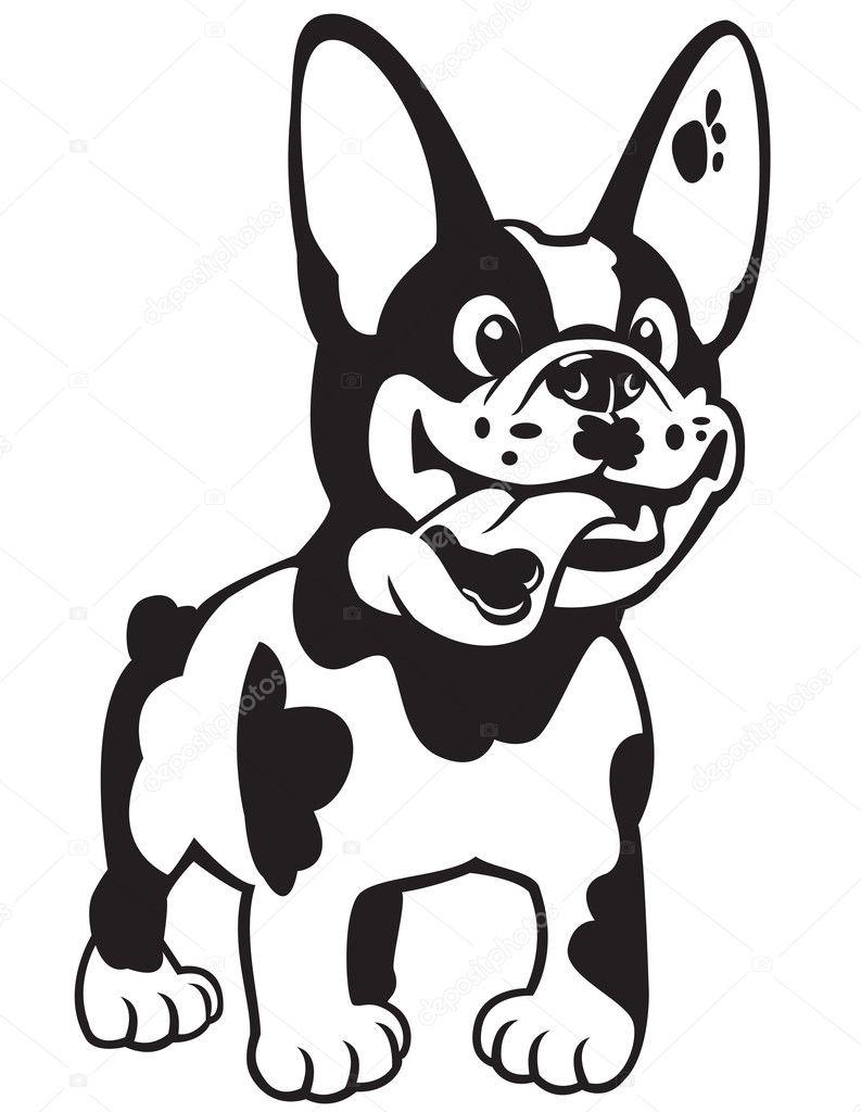 Dibujos animados bulldog francés negro blanco — Vector de stock ...