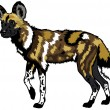 Stock Vector: Africwild dog