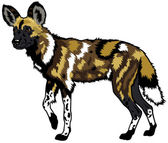 African wild dog — Stock Vector