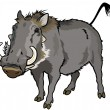 Royalty-Free Stock Vector Image: Warthog