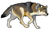 Wolf side view — Stock Vector