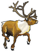 Caribou reindeer — Stock Vector