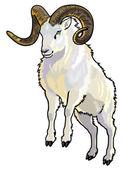 Dall sheep — Stock Vector