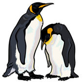 Emperor penguins — Stock Vector