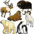 Set with wild animals of arctic — 图库矢量图片