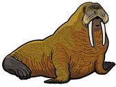 Walrus — Stock Vector